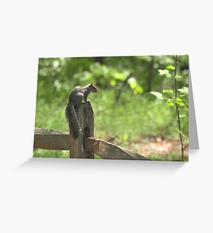 Squirrel at Cape Fear Greeting Card