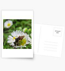 Assasin Bug Gifts   Merchandise  d1c1e9b506c91
