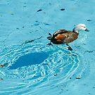 aquaduck by Mick Kupresanin