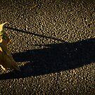 autumn leaf by Mick Kupresanin