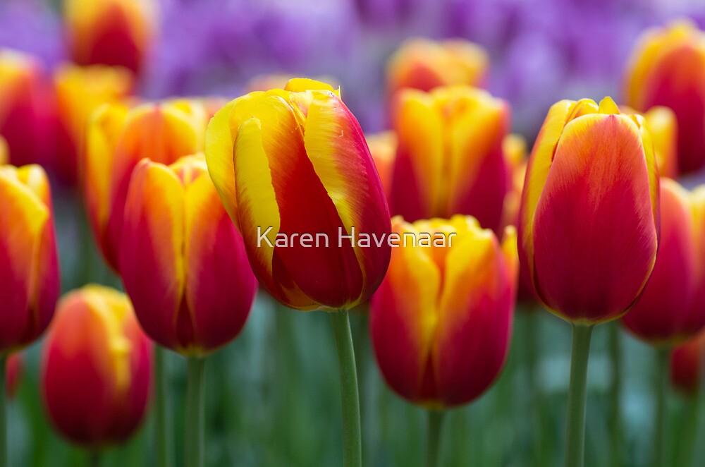 Colours!!!! by Karen Havenaar