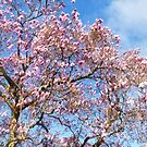 Magnolia Against the Sky by Susan Savad