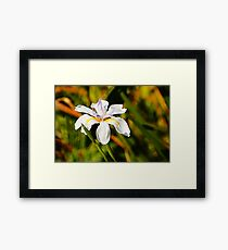 lily valley Framed Print
