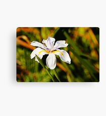 lily valley Canvas Print