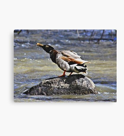 Shake Your feathers Canvas Print