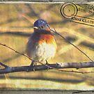 Bluebird Gone Postal by Caren