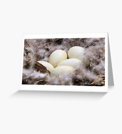 Promise of new life Greeting Card