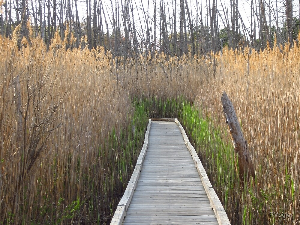 Salt Marsh Labyrinth by RVogler