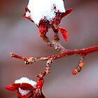 Tenacious Winter by Arla M. Ruggles