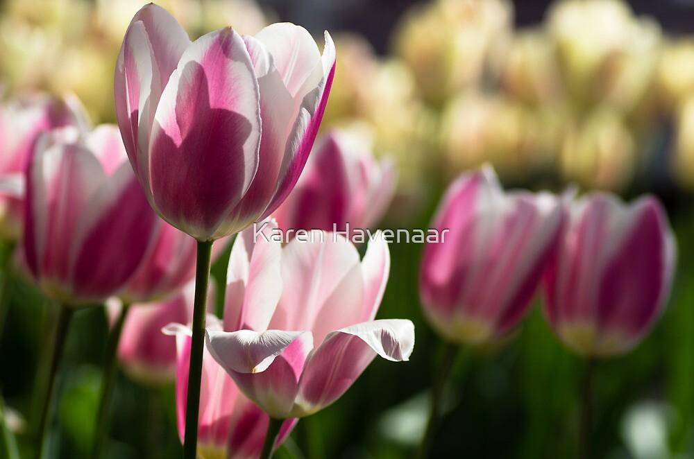 Tightly Pink by Karen Havenaar
