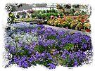Inside Ott's Greenhouse - Schwenksville, Pennsylvania, USA by MotherNature