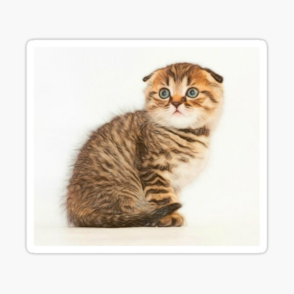 Scottish Fold Lover Stickers Redbubble
