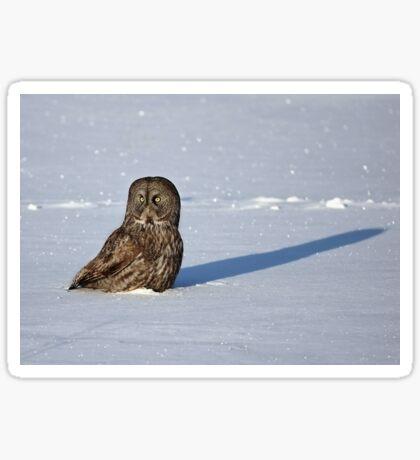 Great Grey Owl casts a long shadow Sticker