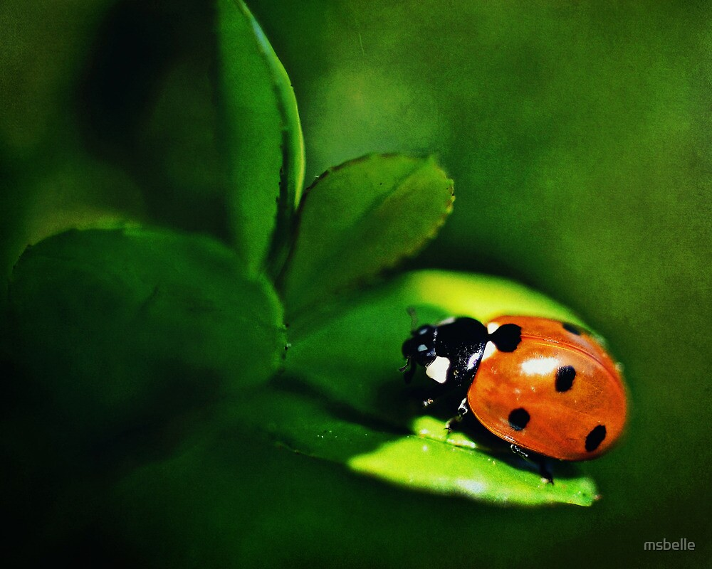 Little Miss Ladybug by msbelle