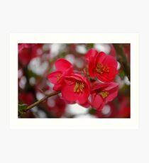 flowering quince cluster Art Print