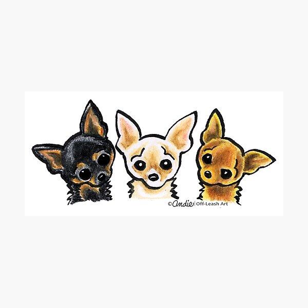 Smooth Chihuahua Trio Photographic Print