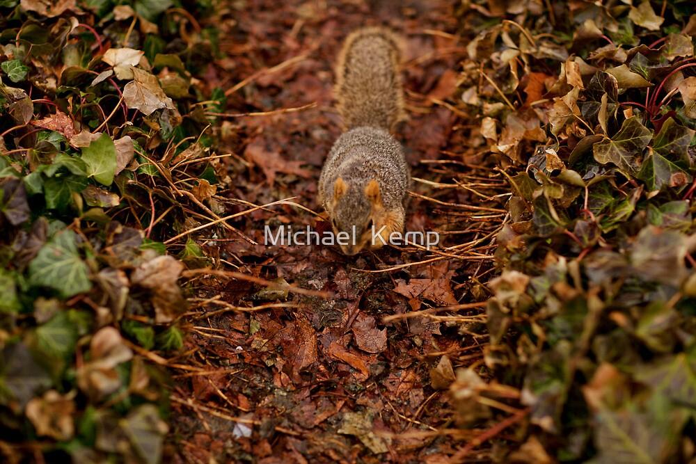 Squirrel by Michael  Kemp