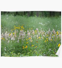 Scarlet Guara in the Meadow Poster
