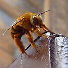 Sweet Little Bee... by debsphotos