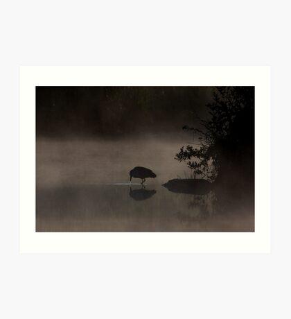 Black-crowned Night heron Art Print
