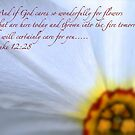 Luke 12:28 by Terry Arcia