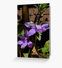 Purple Lurker Greeting Card