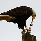 Bald Eagle Part Of Nature by Bob Christopher