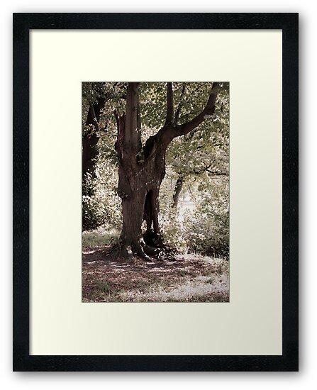 The Ghost Tree by Richard Eijkenbroek
