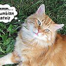 Funny Cat High on Catnip by LWdesignz