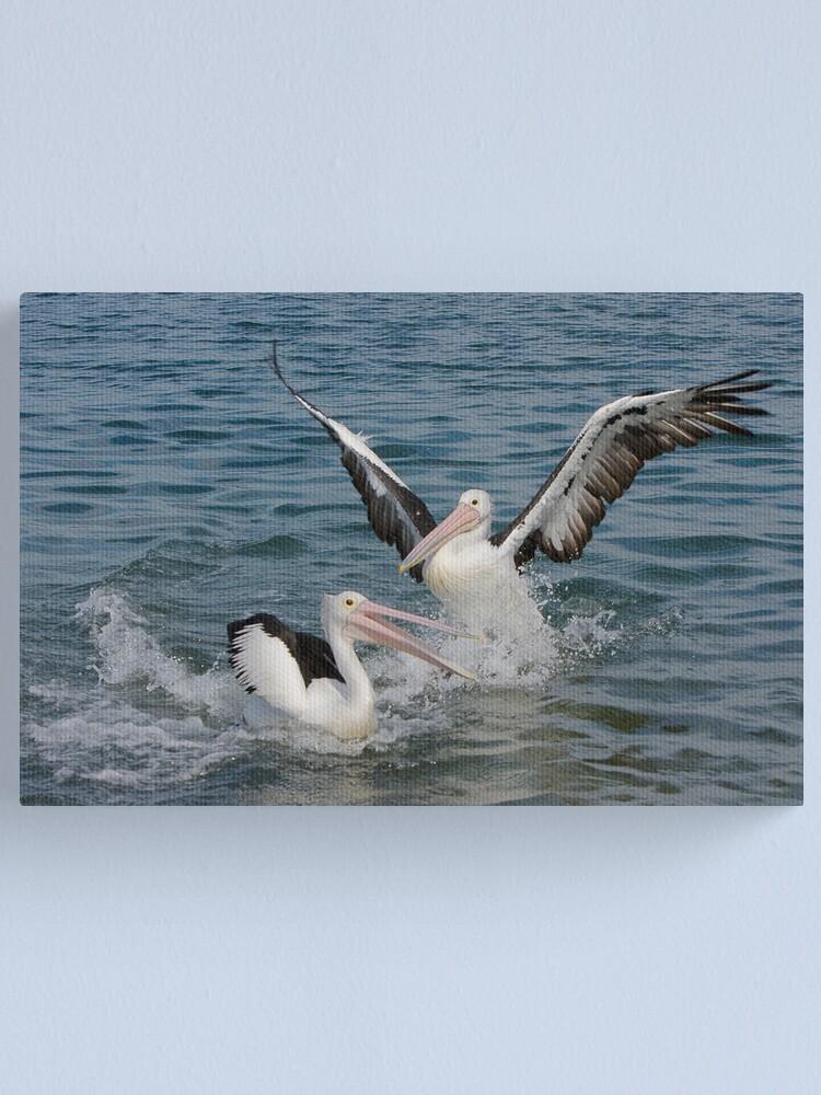 Alternate view of Pelicans Canvas Print