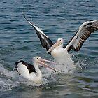 Pelicans by TonySlattery