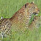 Hiding in the tall grass! by jozi1