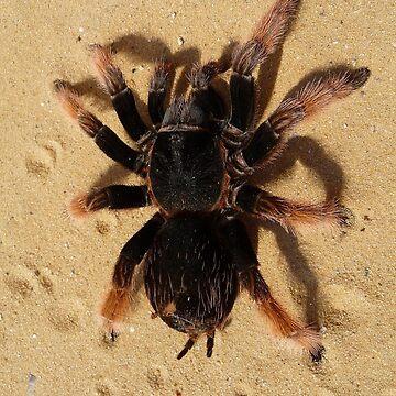 Brown Tarantula Spider by LittleCsDesigns
