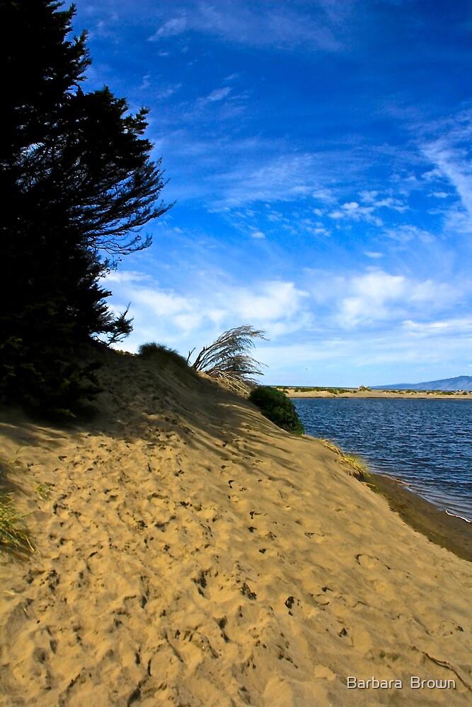 A Walk to the Beach by Barbara  Brown