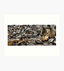 Cape Fur Seals Art Print