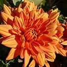A Touch of Orange by pat gamwell