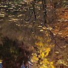 Late Autumn Reflections on Pond by Karen E Camilleri