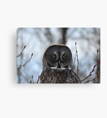 The Great Gray Owl Canvas Print