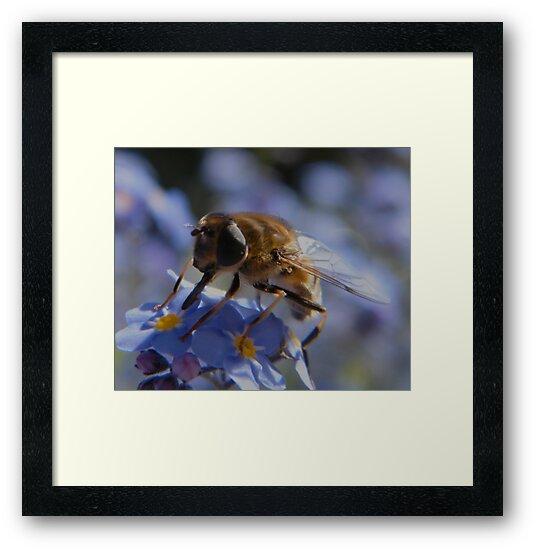 Bee by ElsT