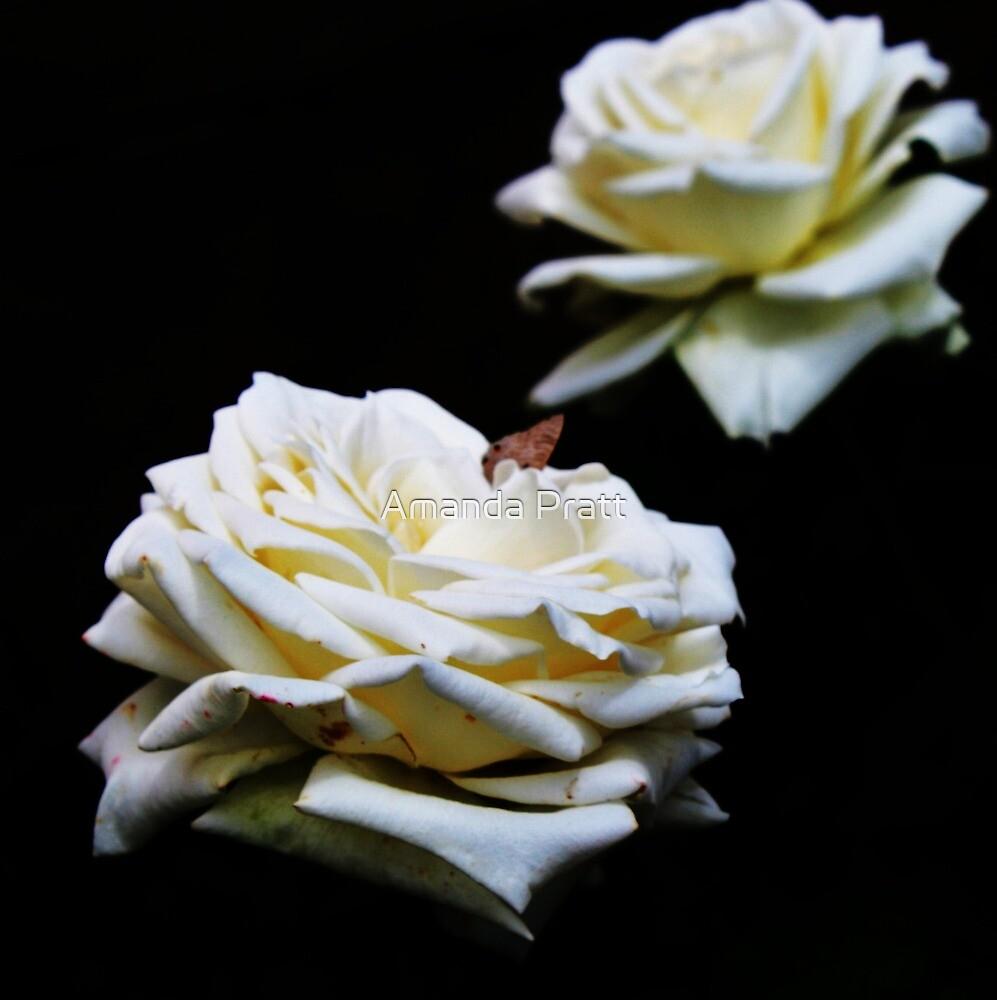 Wit Roos (White Rose) by Amanda Pratt