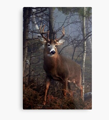 Buck on ridge portrait - White-tailed Deer Metal Print