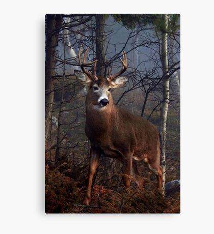 Buck on ridge portrait - White-tailed Deer Canvas Print