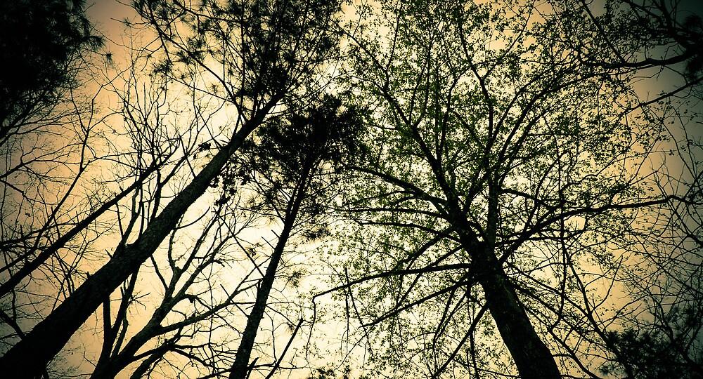 Trees by ddunson