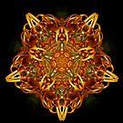 Banksia Star by Joel Fourcard