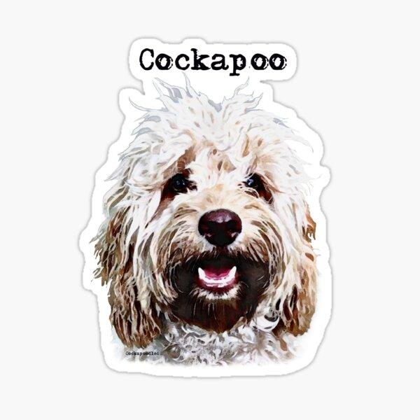 Apricot Blonde Cockapoo  Sticker