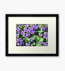 Field of Violets Framed Print