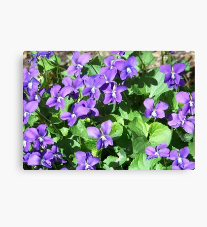 Field of Violets Canvas Print