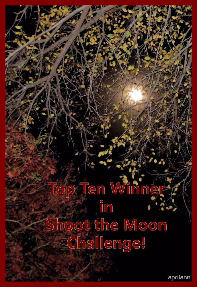 Banner - STM - Top Ten Winner by aprilann