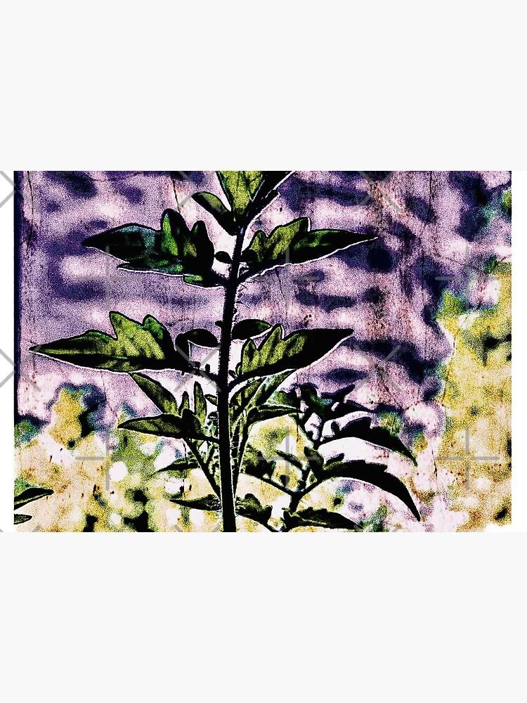 Purple Tomato by THamilton81