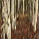 Spotted gum forest by Fran53